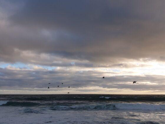 storm birds against a grey cloudy sky