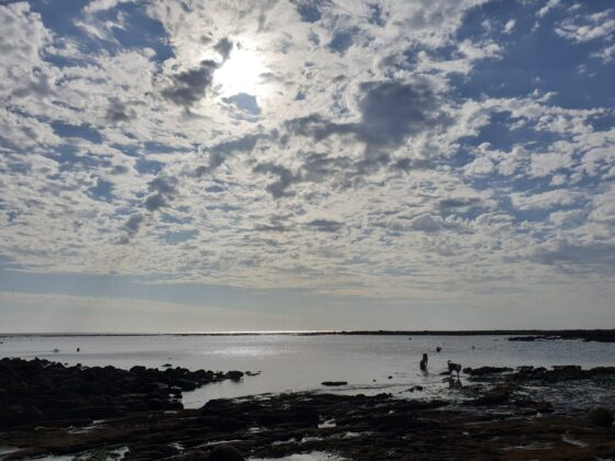fish scale clouds above the sea with silhouette dog and child