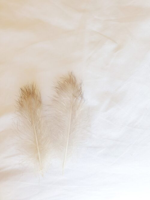 2 white downy feathers