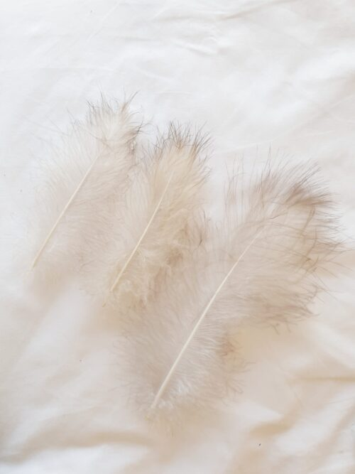 3 white downy feathers with grey tips